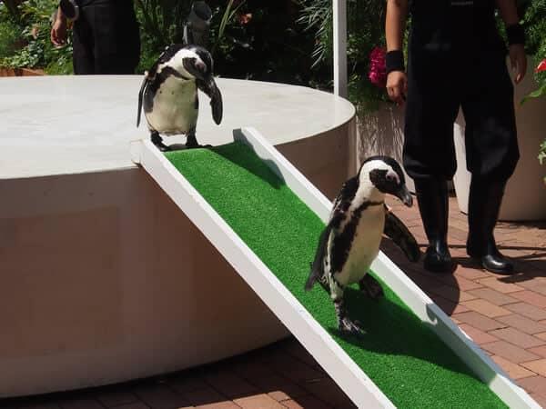 アクアパーク品川 ペンギンショー
