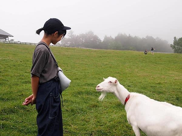 まきば公園 山羊と